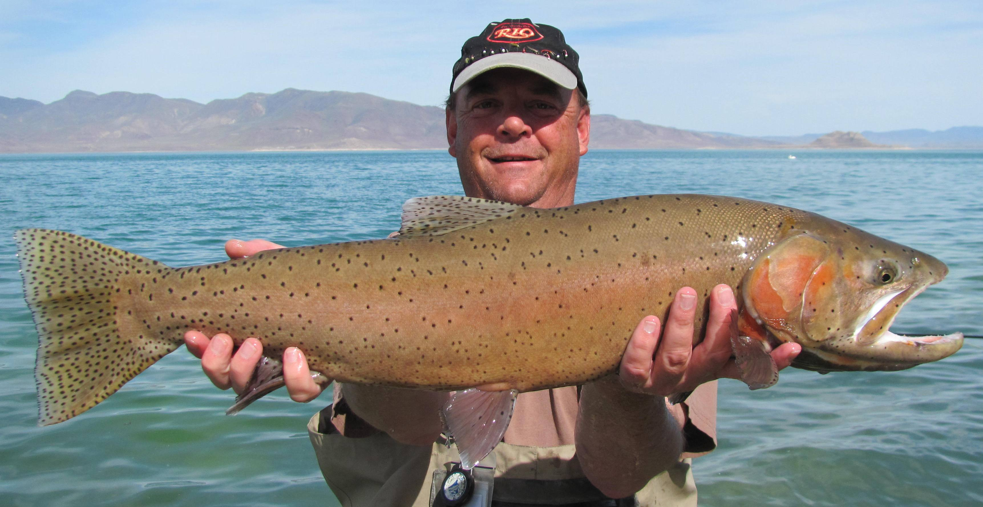 Fishing report october 14th 2014 pyramid lake fly fishing for Pyramid lake fishing report
